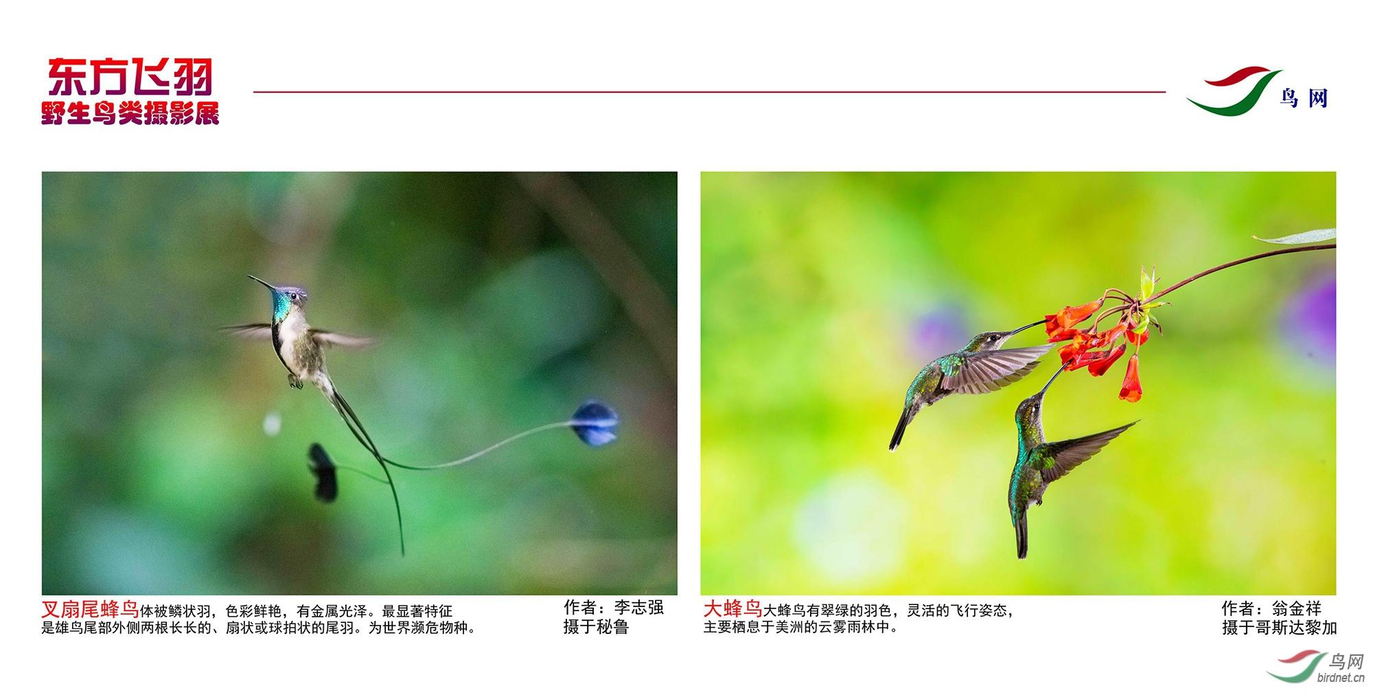 1_东方明珠摄影展照片_02.jpg