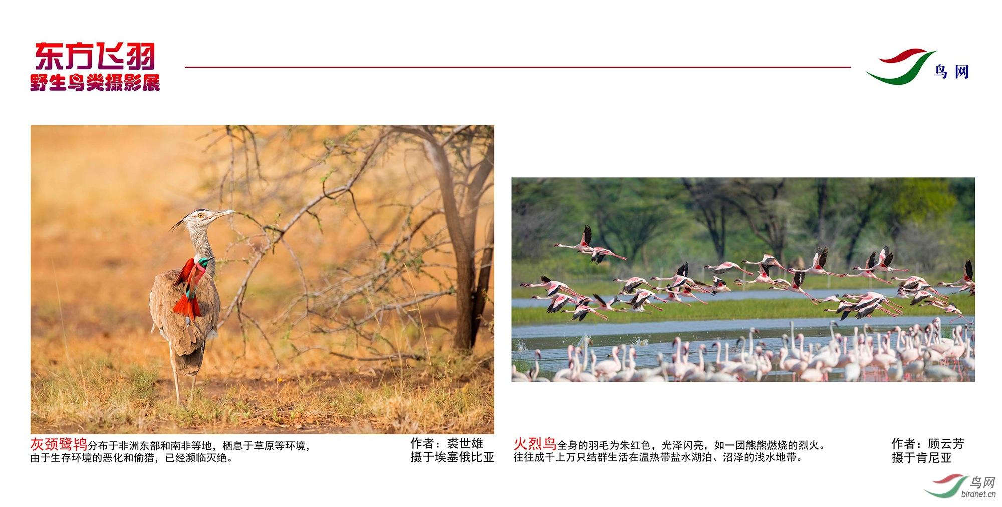1_东方明珠摄影展照片_04.jpg