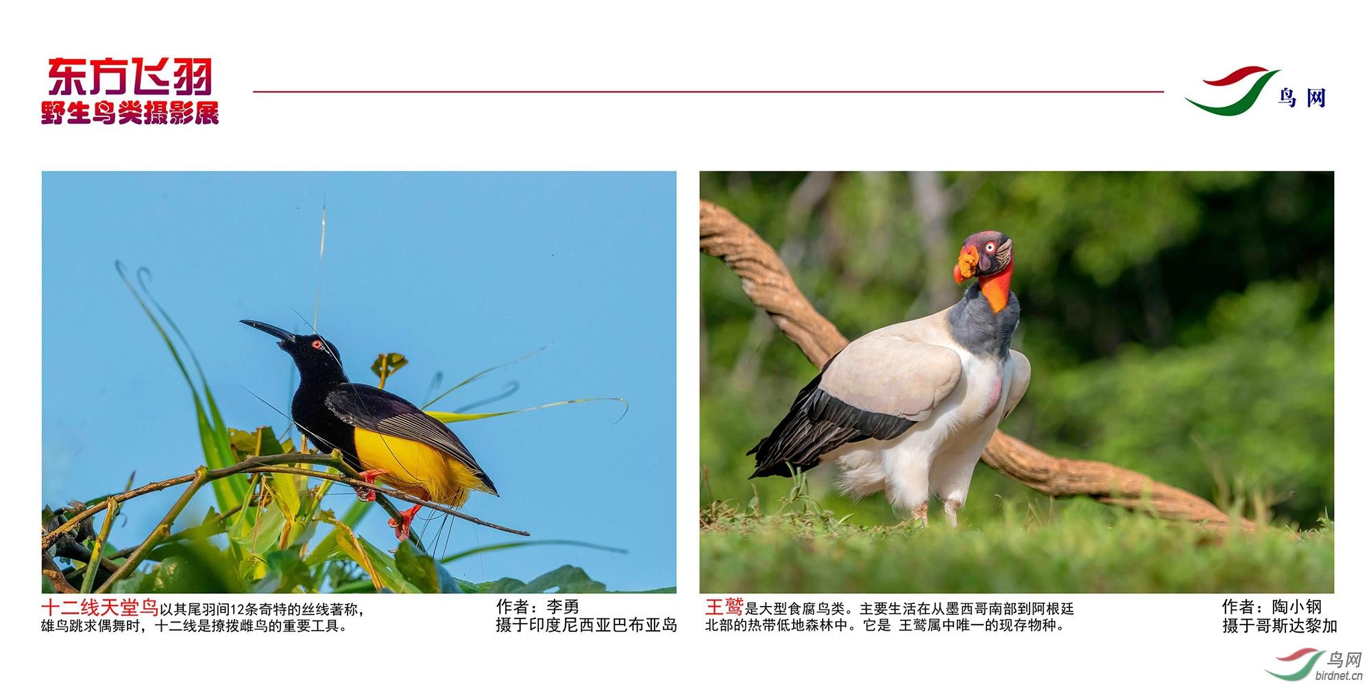 1_东方明珠摄影展照片_06.jpg