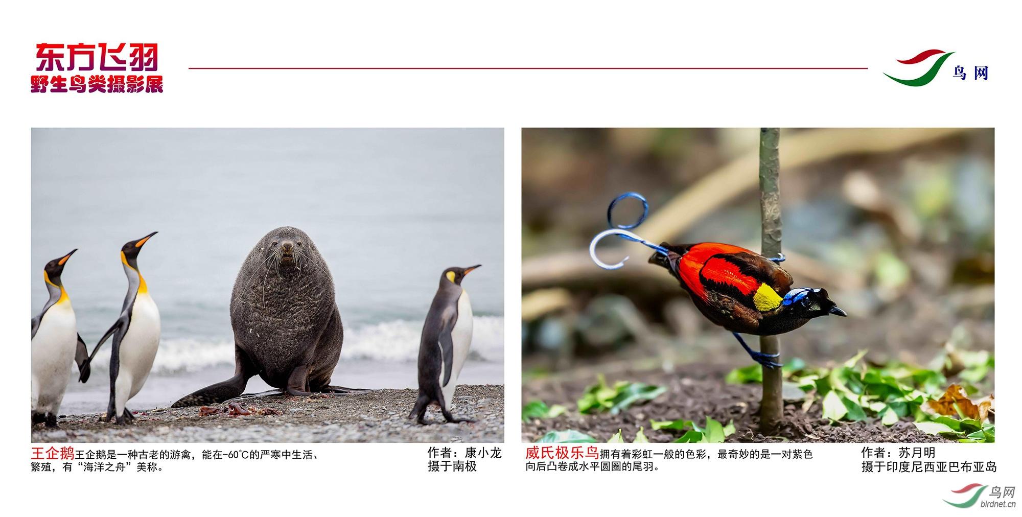 1_东方明珠摄影展照片_07.jpg
