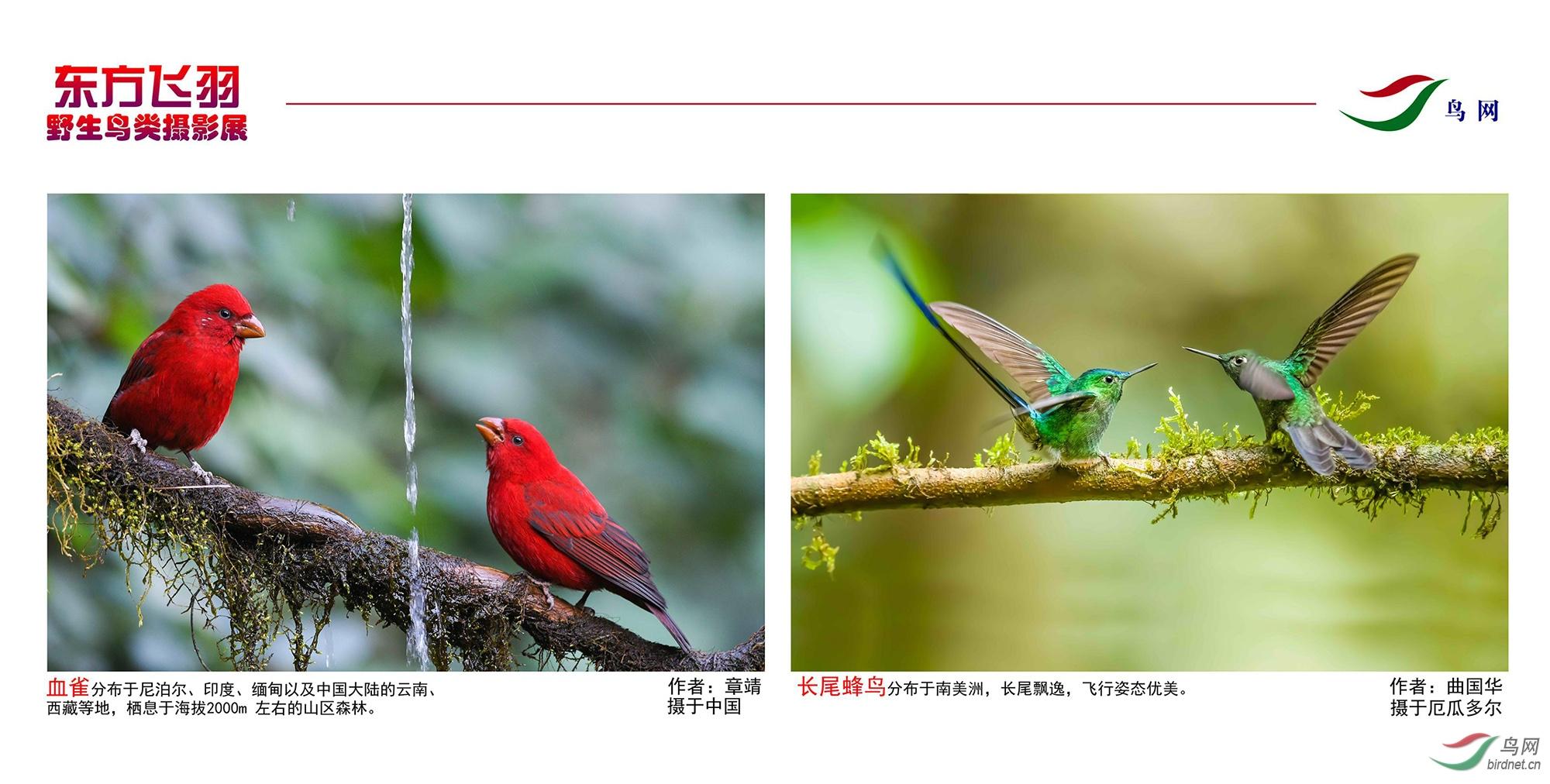 1_东方明珠摄影展照片_09.jpg