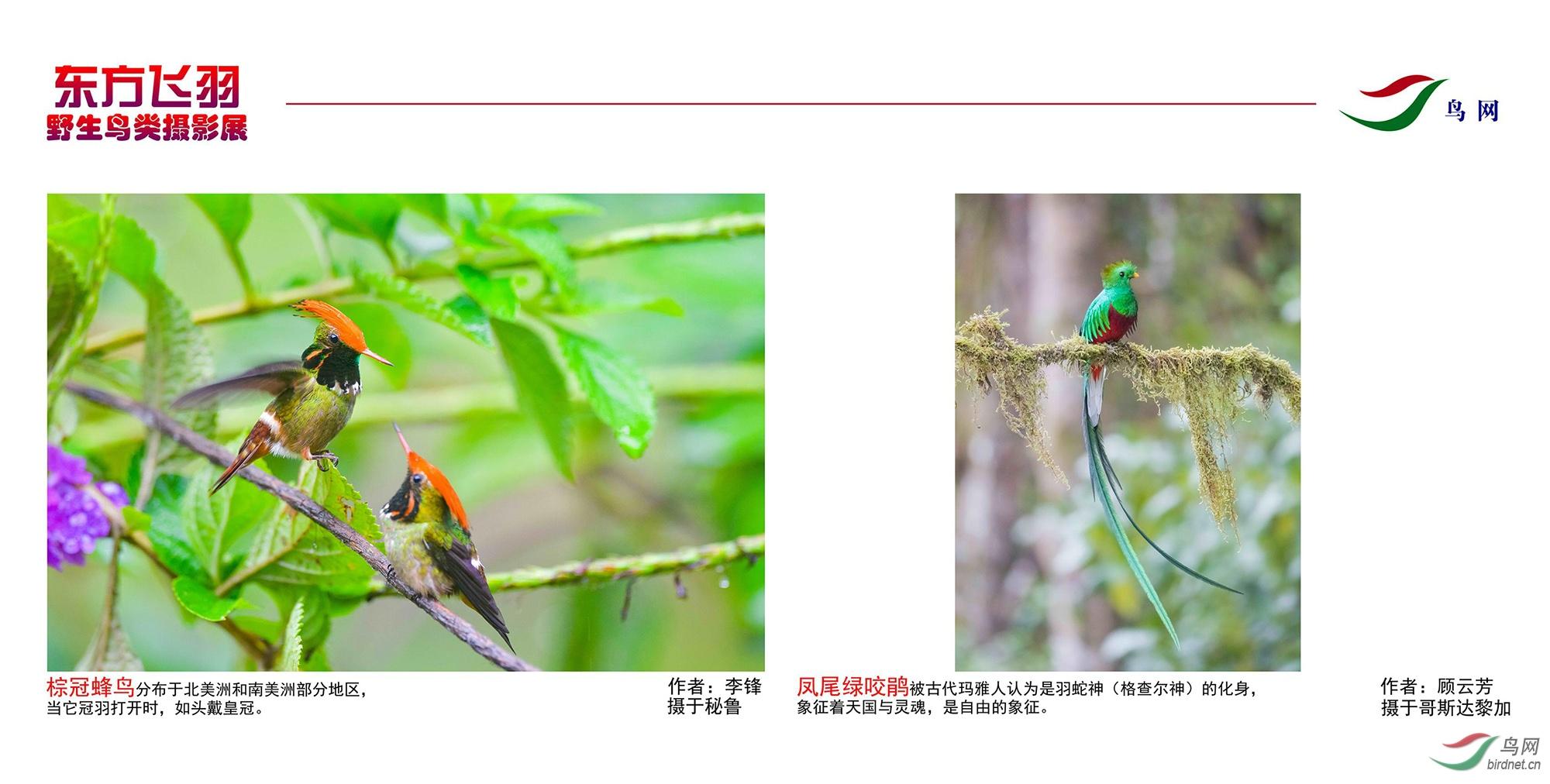 1_东方明珠摄影展照片_11.jpg