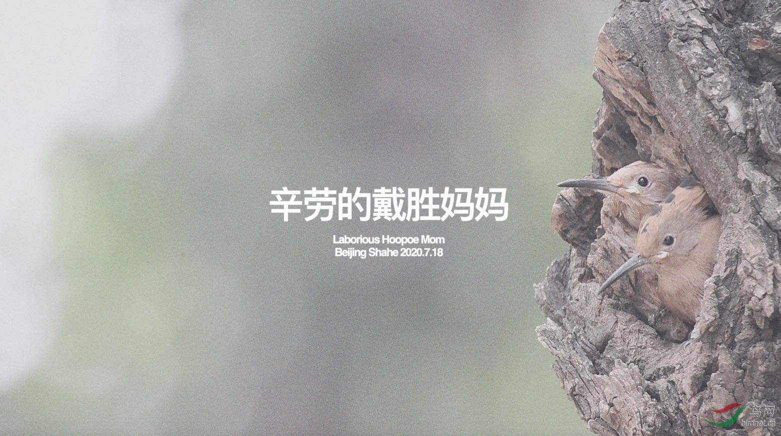 戴胜封面500k.jpg