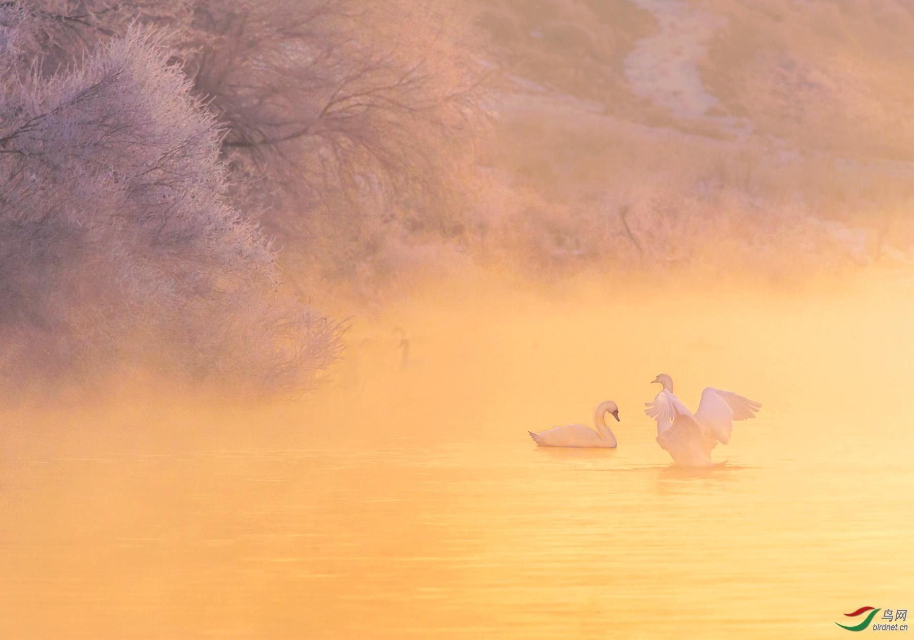 玉兔拍拍20202674.雾朦胧鸟朦胧.jpg