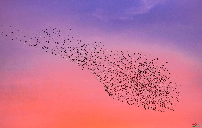 薄发20200728.一座万鸟欢腾的城市.jpeg
