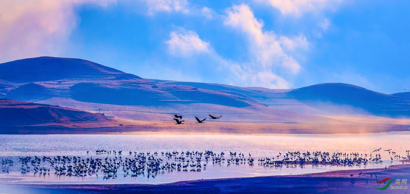 薄发-20202896.黑颈鹤在云南的时光.jpeg