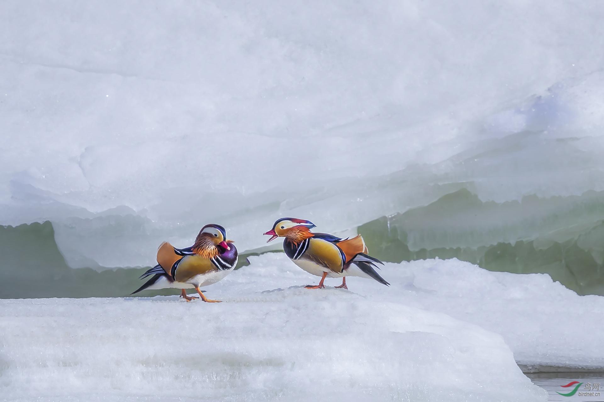 冬天的雪-20200062.08.jpg