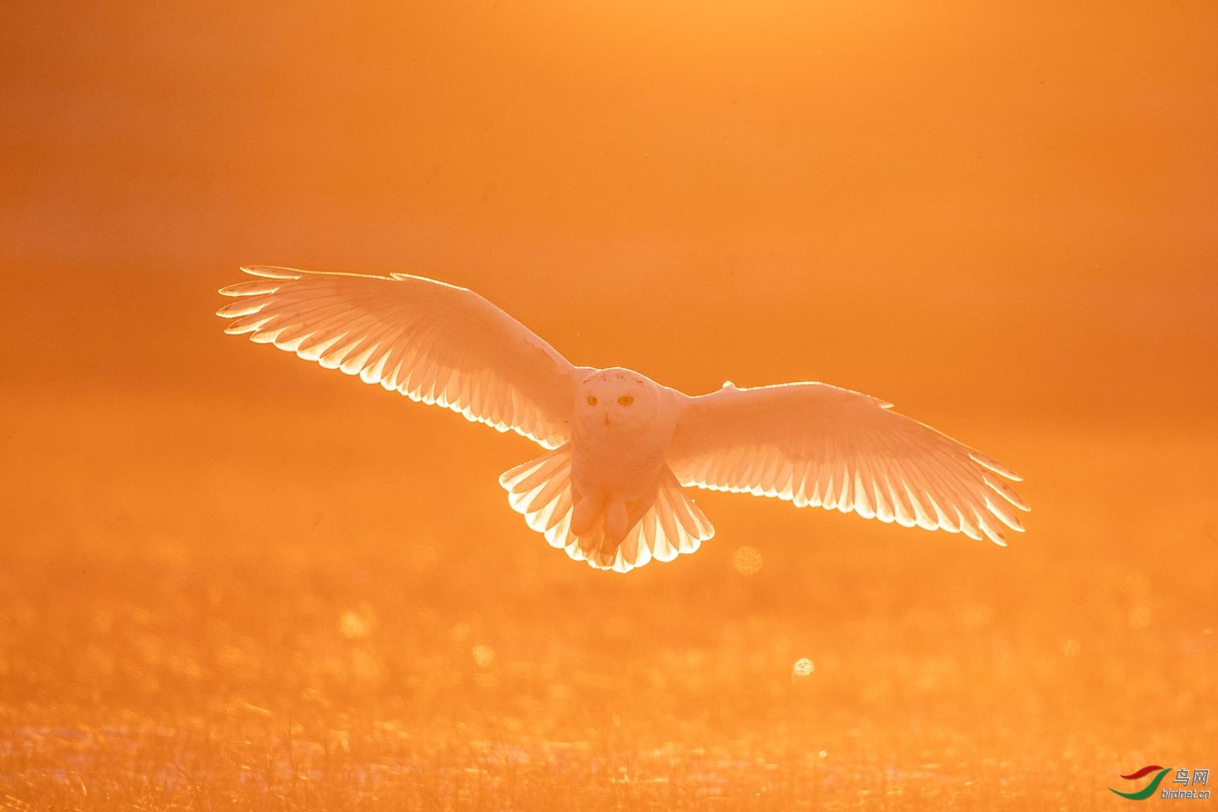 国庆拍鸟20202539.逆光.jpg