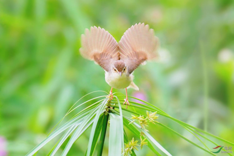 202057.展开想象的翅膀