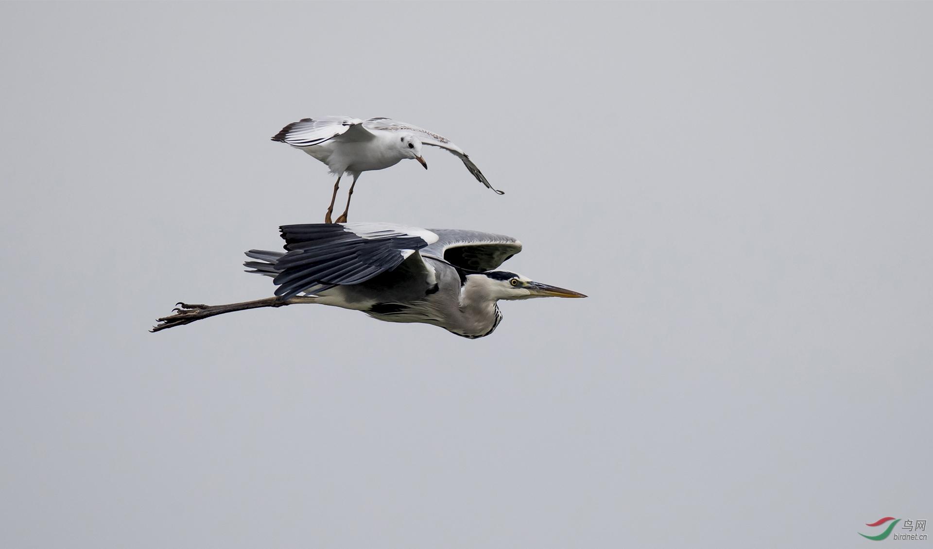 769.鸟类故事2.jpg