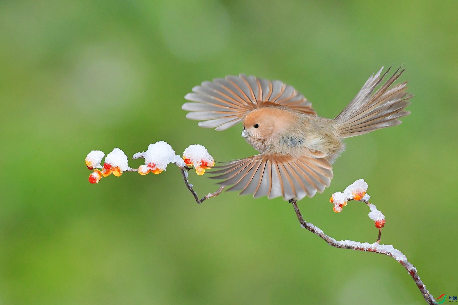 羽花绽放迎新春