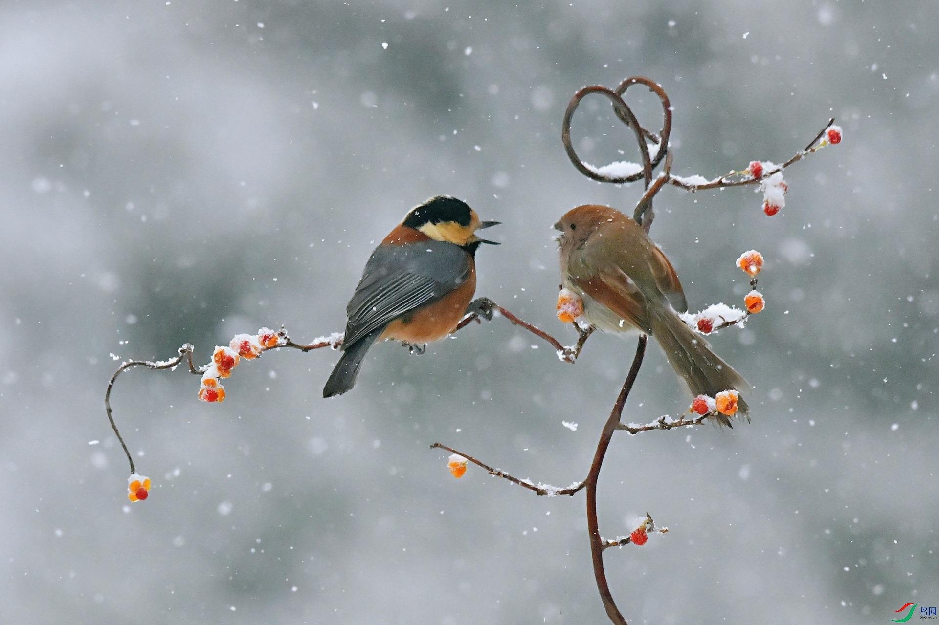 雪中二重唱