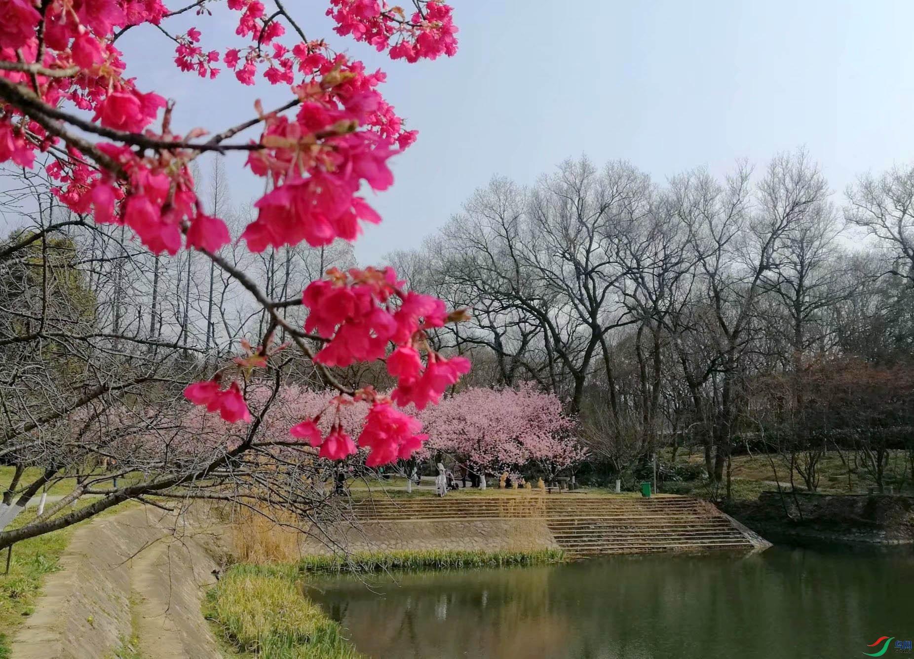 梅花园.jpg