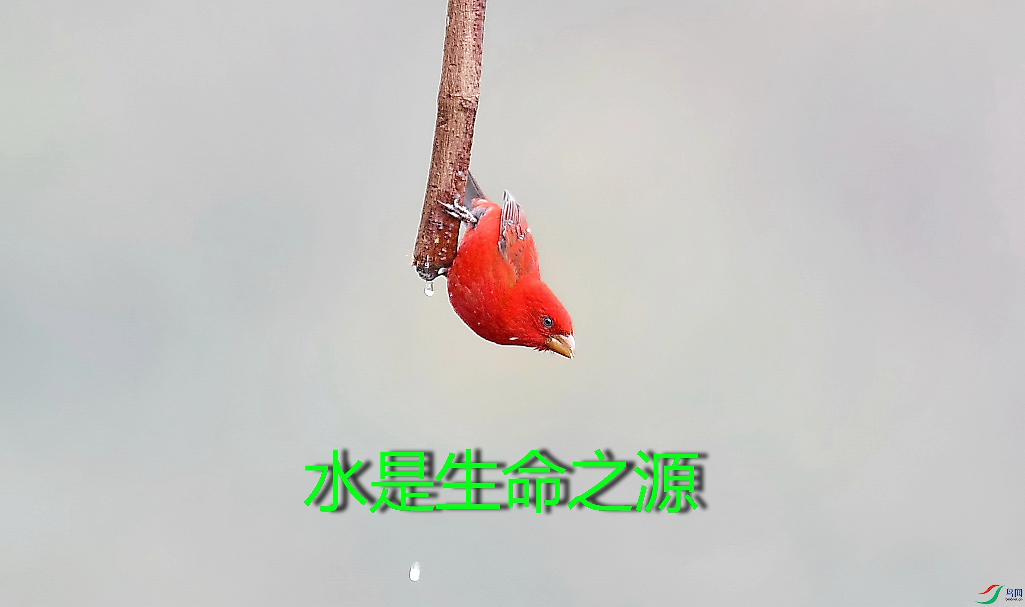 DSC_7643_副本.jpg