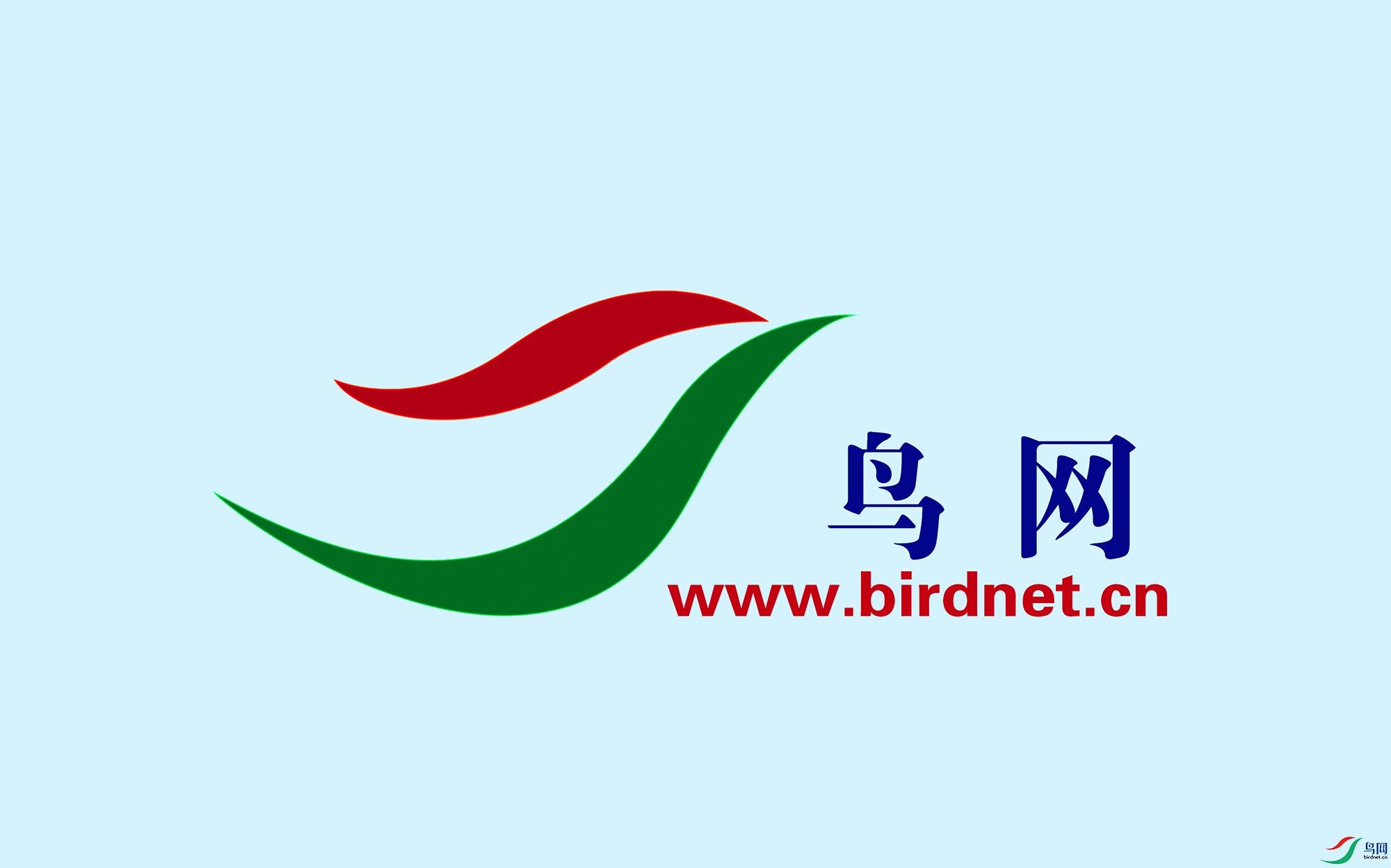 鸟网LOGO-发稿用.jpg