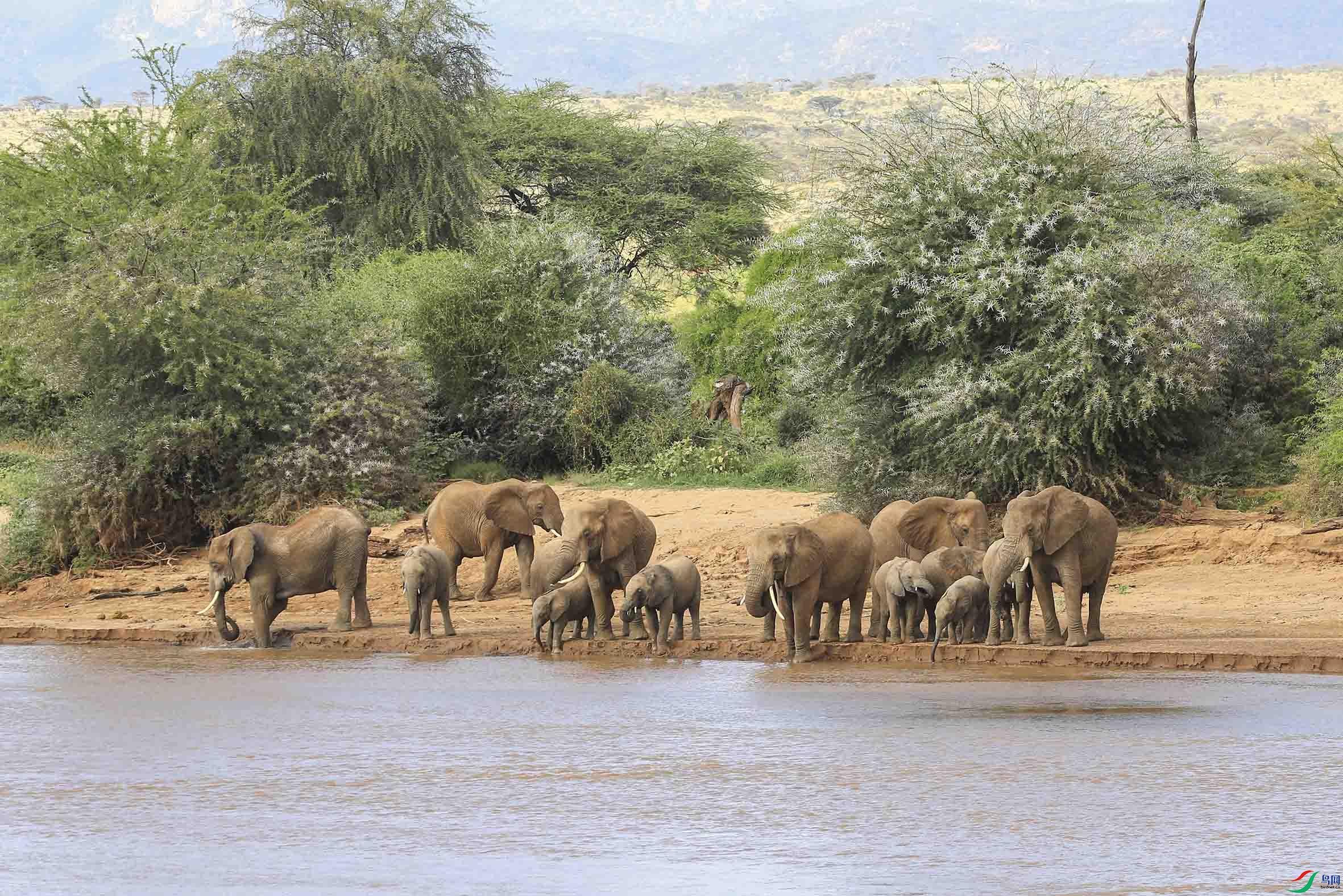 非洲大象      (2).jpg