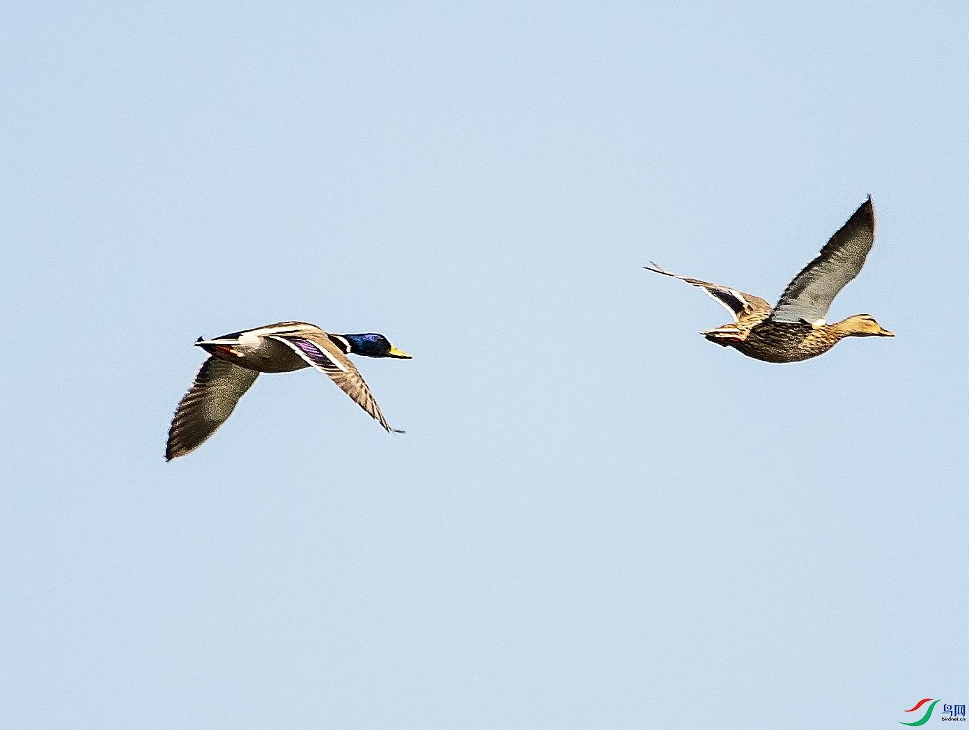 DSC_4777 鸟网.jpg