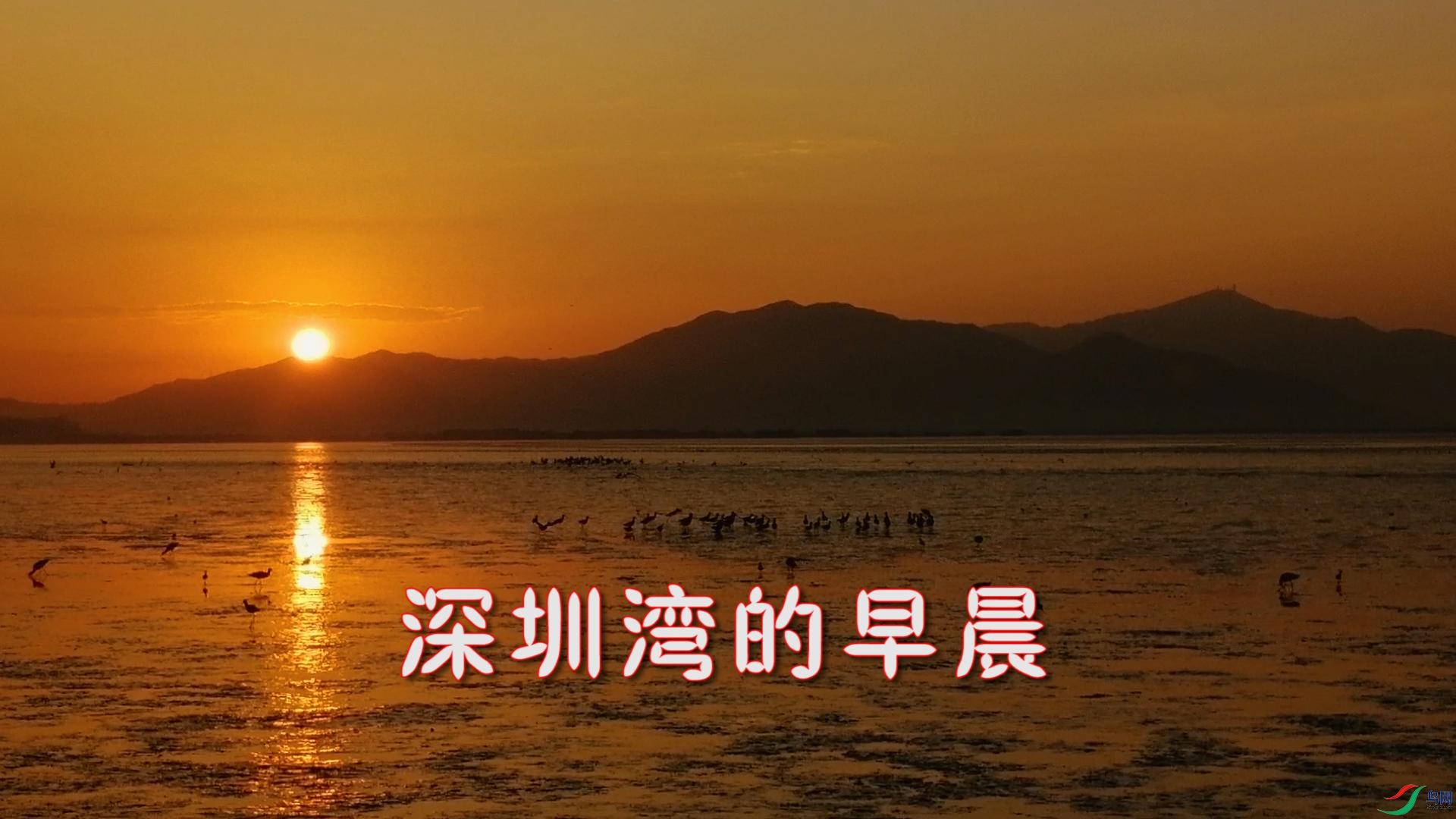 深圳湾早晨.jpg