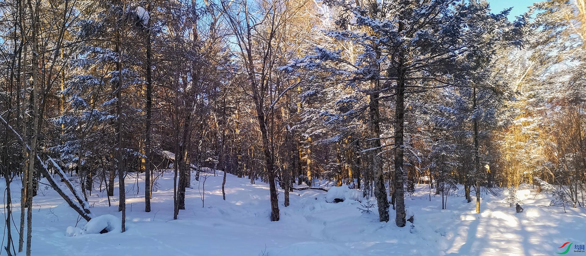 林海雪原的早晨