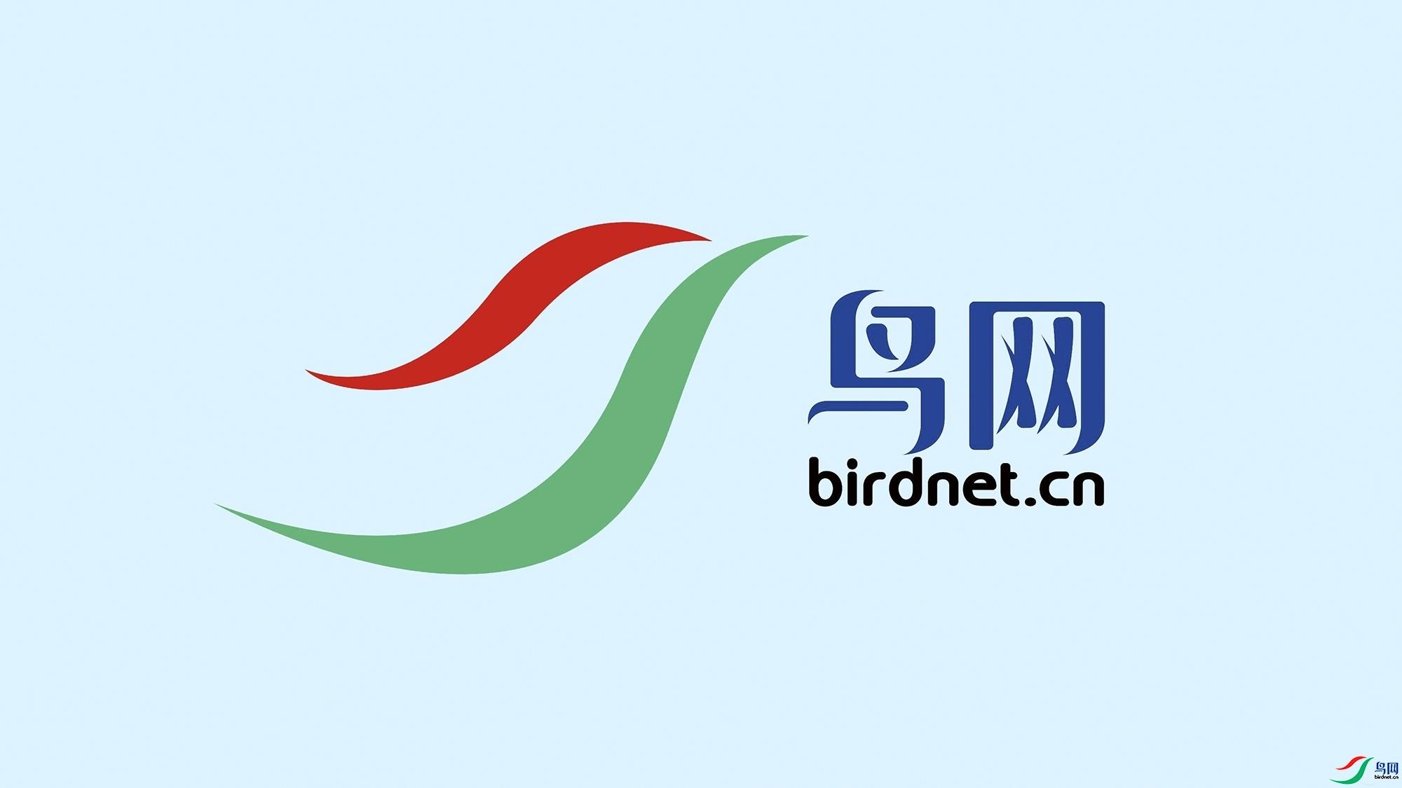 鸟网LOGO图.jpg