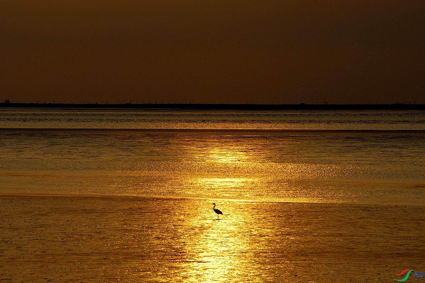060916红海滩 (53)-aaa.jpg