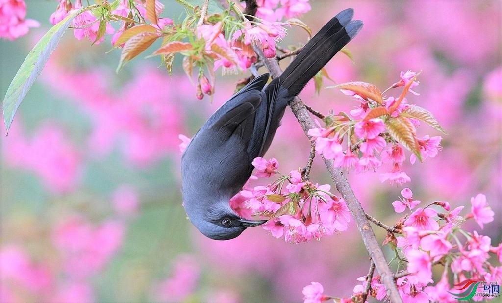 花鸟图.jpg