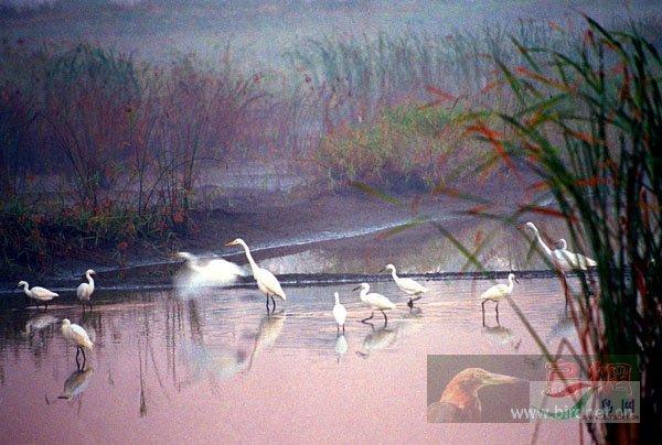 """""""2007鸟网之夏""""野生鸟类摄影比赛评委作品展示"""