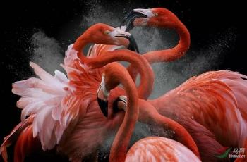 今年最好看的鸟类摄影照片都在这里