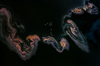 """""""池杉湖杯""""2018国际自然与风光摄影大赛【艺术(画意)摄影】类入围作品公示"""