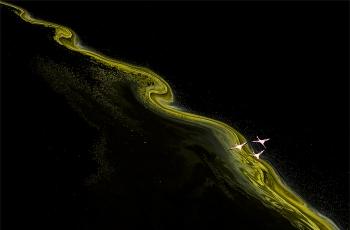 """""""池杉湖杯""""2018国际自然与风光摄影大赛【纯自然风光类】入围作品公示"""