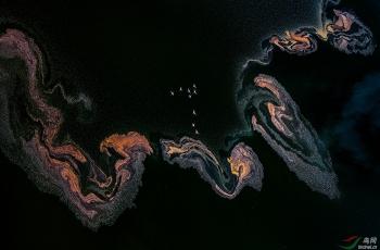"""""""池杉湖杯""""2018国际自然与风光摄影大赛 【艺术(画意)摄影】获奖作品"""