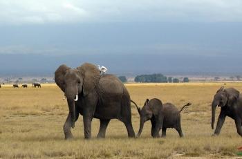 大家跟着走!(大象带小象)祝賀榮獲動物精華
