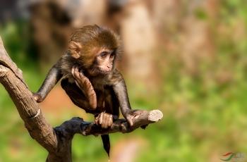 猴崽子-祝贺荣获首页精华