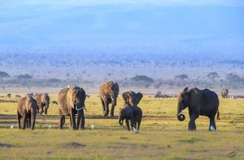 非洲大象(祝贺荣获首页动物精华)