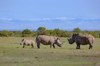白犀牛 —— 欢乐的一家