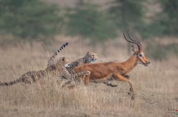"""""""全面高感大画幅"""" """"— NikonD850 野生动物摄影实战测评(三)"""