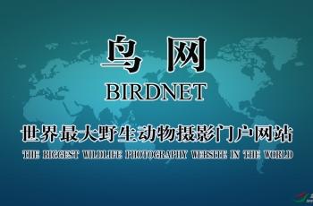 中國鳥網2018年年會視頻
