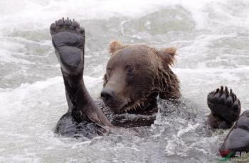 哈喽大熊---祝贺首页精华!