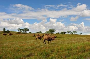 骆驼家园(荣获首页动物精华)