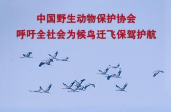 呼吁全社会为候鸟迁飞保驾护航