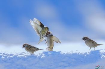 雪地争霸!