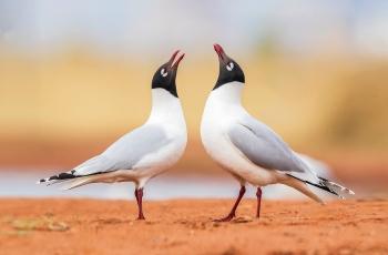 夫妻同唱幸福歌