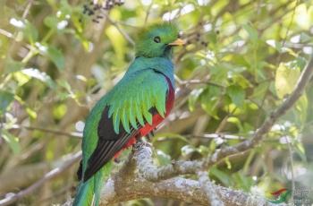 19年底~20年度哥斯达黎加拍鸟活动[版主/管理员/VIP福利]