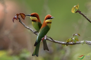 《树上鸟儿成双对》——祝各位老师新周快乐!