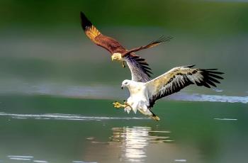 目标一致【祝贺荣获首页鸟类精华】