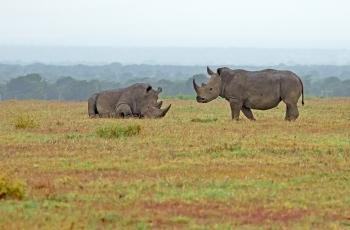 非洲五猛之一犀牛