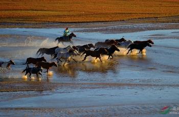 河上奔腾的骏马