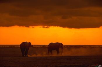 非洲草原——大象