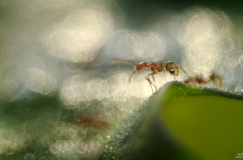 快乐的小蚂蚁【贺获鸟网首页创意精华】