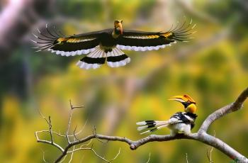 《中缅边境的大鸟》组图